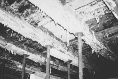 Abb: Hausschwammbildung durch diffusionshemmende Fußbodenkonstruktion Quelle: FUSSBODEN ATLAS®
